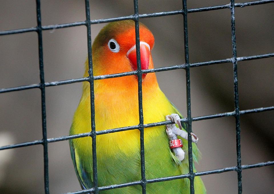VogelinkooiLife4Fun