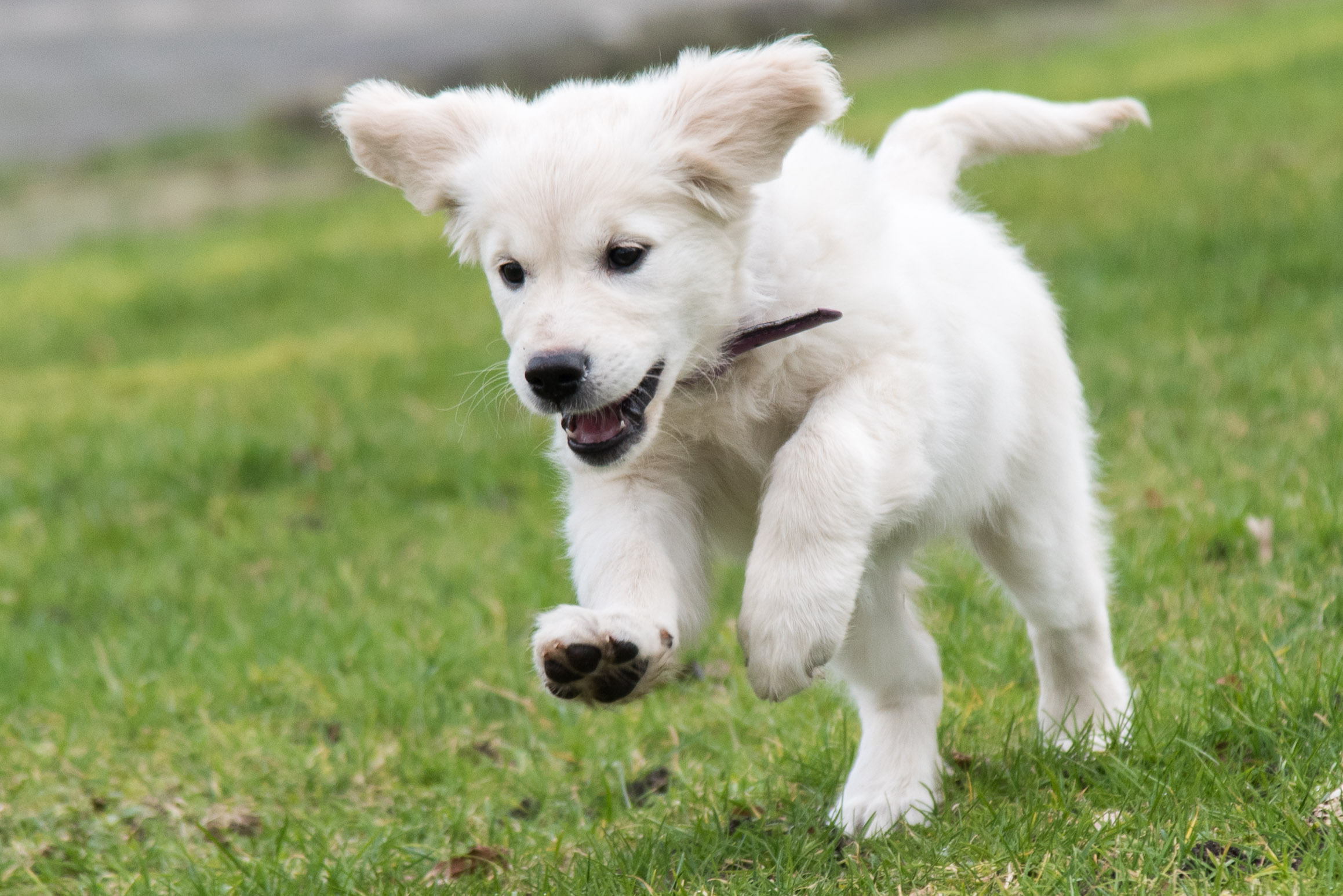 Lief puppy